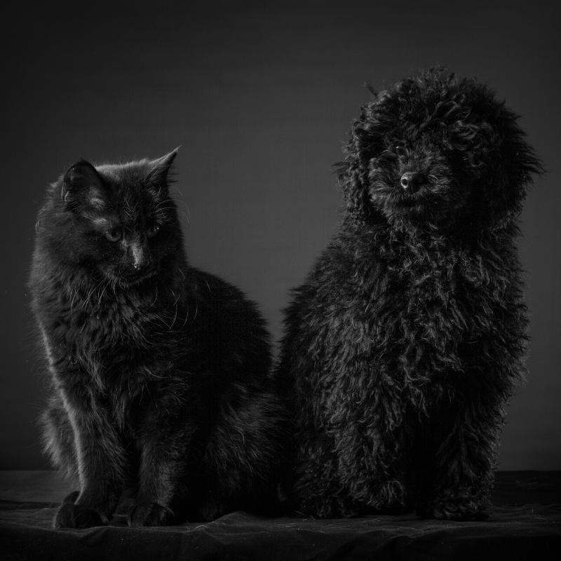 Éleveur chat et chien