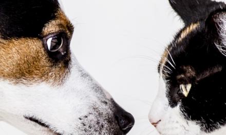 Le détoxifiant pour vos animaux