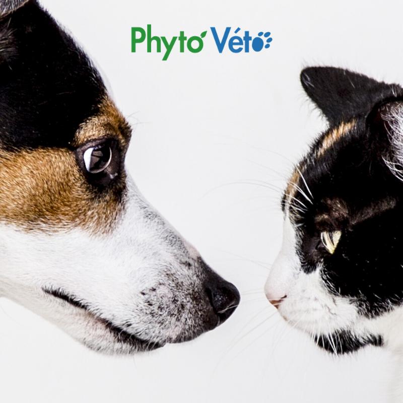Détoxifiant chat et chien