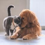 Les problèmes Articulaires chez le chat et le chien