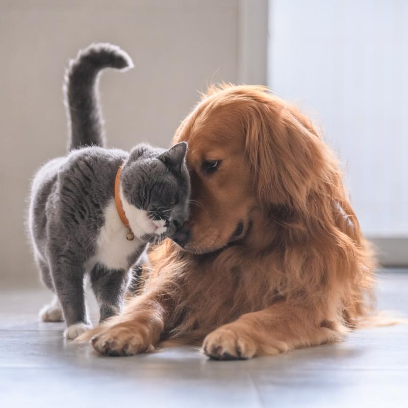 Les Problèmes Articulaires Chez Le Chat Et Le Chien Phyto Veto