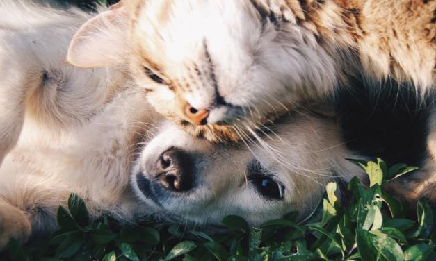 La beauté du poil et de la peau chez nos chiens, chats, et chevaux.