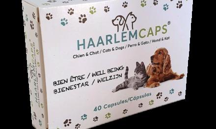 Huile de Haarlem : Une huile aux multiples vertus